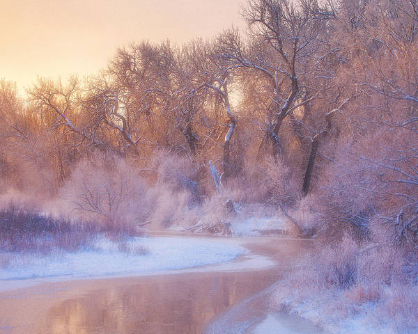 Ice Poster featuring the photograph The Warmth Of Winter by Darren White