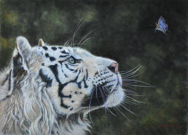 Tiger Poster featuring the painting The White Tiger And The Butterfly by Louise Charles-Saarikoski