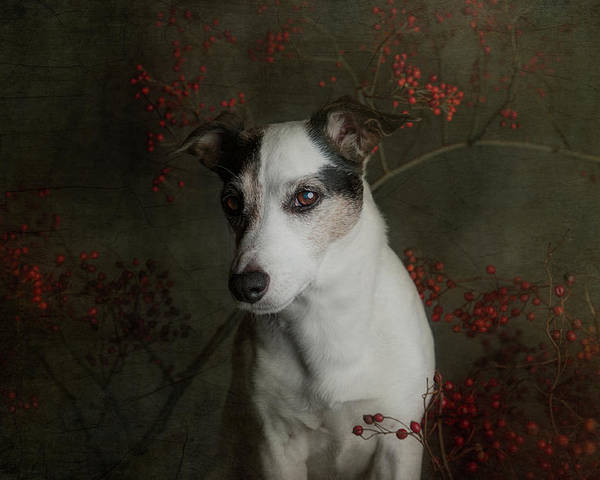 Dog Poster featuring the photograph The Woods Are Lovely, Dark And Deep..... by Heike Willers