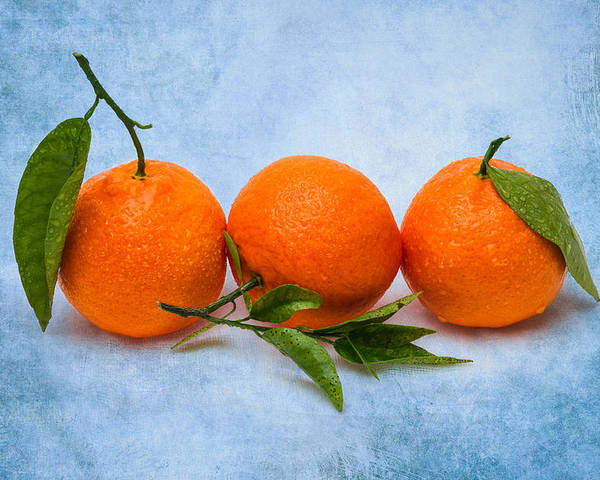 Mandarin Poster featuring the photograph Three Tangerines by Alexander Senin
