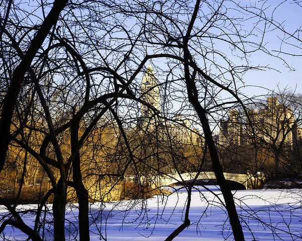 Bridge Poster featuring the photograph Through The Branches 3 - Central Park - Nyc by Madeline Ellis