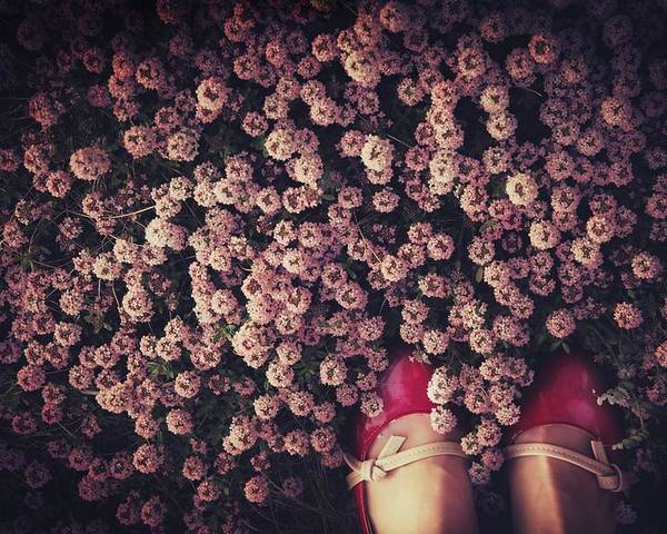 Shoes Poster featuring the photograph Thyme Carpet by Takako Fukaya