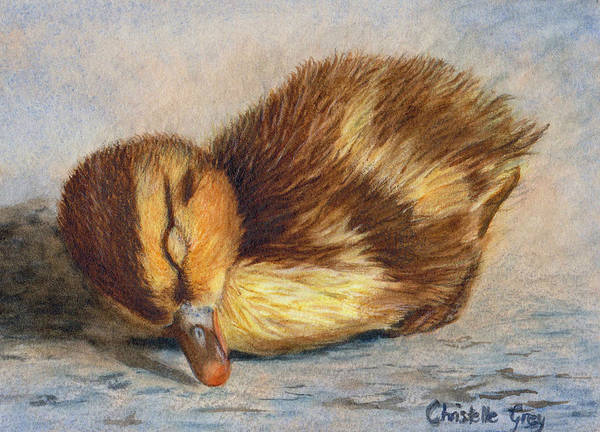 Duckling Poster featuring the painting Time For A Nap by Christelle Grey