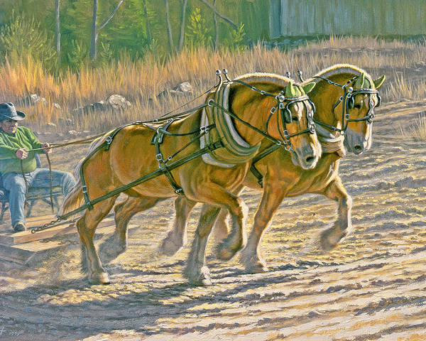 Horse Poster featuring the painting Training For The Pull by Paul Krapf