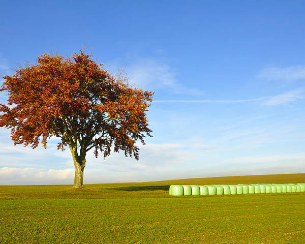 Agriculture Poster featuring the photograph Tree And Hay Bales by Aged Pixel