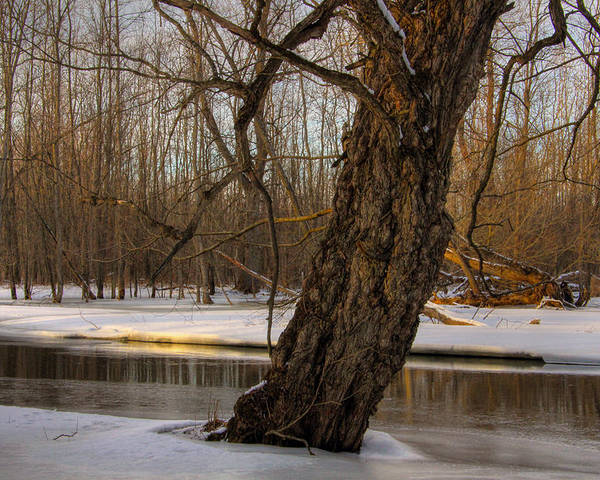 Winter Poster featuring the photograph Tree At Collins Creek 2 by Jim Vance