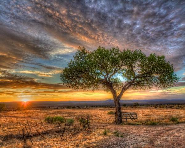 Landscape Poster featuring the photograph Tree At Sunset by William Wetmore