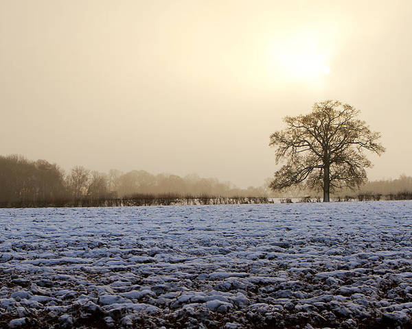 Beautiful Poster featuring the photograph Tree In A Field On A Snowy Day by Fizzy Image