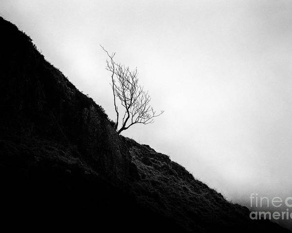 Beautiful Scotland Poster featuring the photograph Tree In Mist by John Farnan