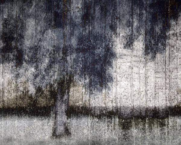 Tree Poster featuring the photograph Tree Through Sheer Curtains by Carol Leigh