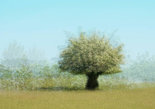 Lonely Tree Poster featuring the photograph Tree With Flowers by Katarina Holmstr??m