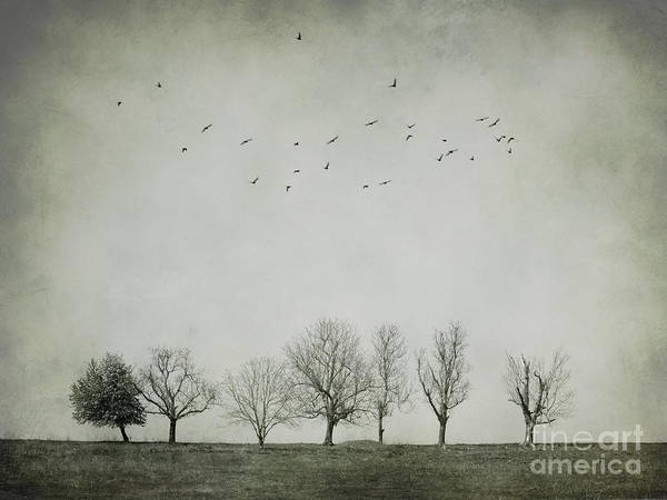 Trees Poster featuring the photograph Trees And Birds by Diana Kraleva