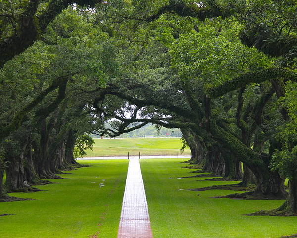 Tree Poster featuring the photograph Trees At Oak Alley Plantation by Denise Mazzocco