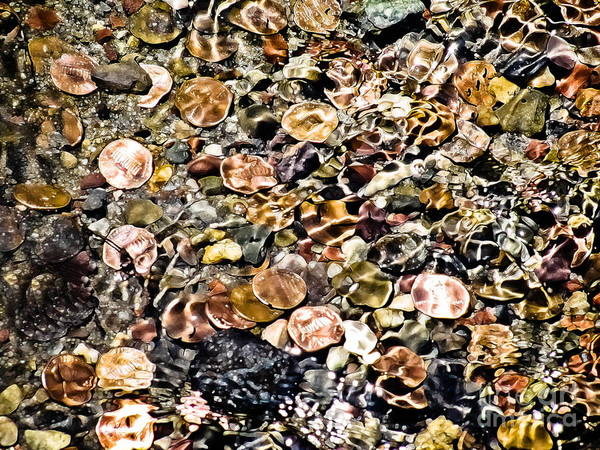 Coins Poster featuring the photograph Trickle Down Theory by Colleen Kammerer