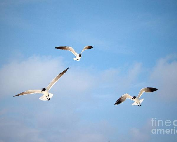Exuma Poster featuring the photograph Trio Of Gulls by Cheryl Hurtak