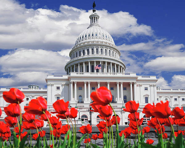 Architecture Poster featuring the photograph Tulips Bloom In Front Of The Capitol by Jaynes Gallery