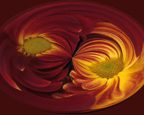 Abstract Poster featuring the photograph Twin Gerbera Abstract by Keith Gondron