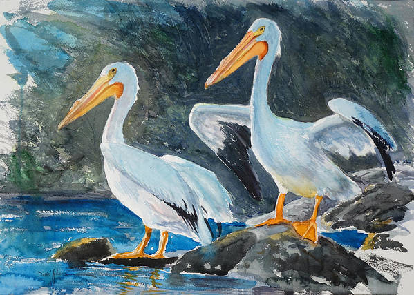 White Pelicans Poster featuring the painting Da208 Twin Pelicans By Daniel Adams by Daniel Adams