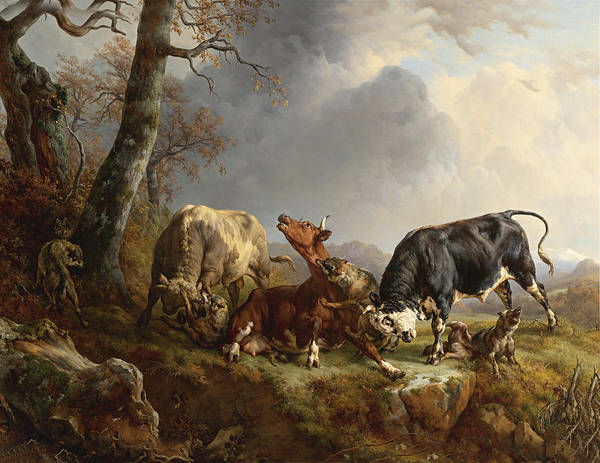 Jacques Raymond Brascassat Poster featuring the digital art Two Bulls Defend Against A Cow Attacked By Wolves by Jacques Raymond Brascassat