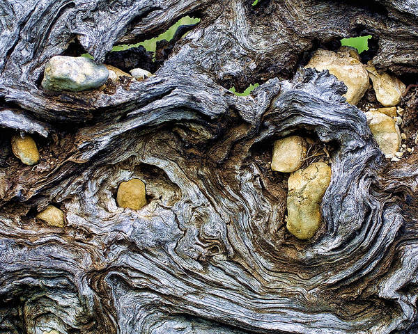 Wood Poster featuring the photograph Under Roots Of Dead Tree by Linda Phelps