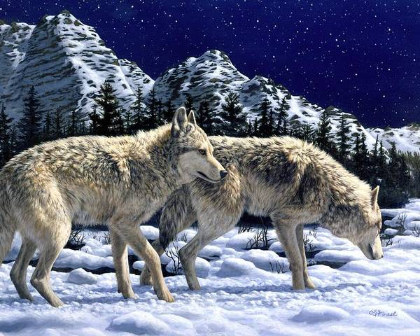 Wolf Poster featuring the painting Wolves - Unfamiliar Territory by Crista Forest