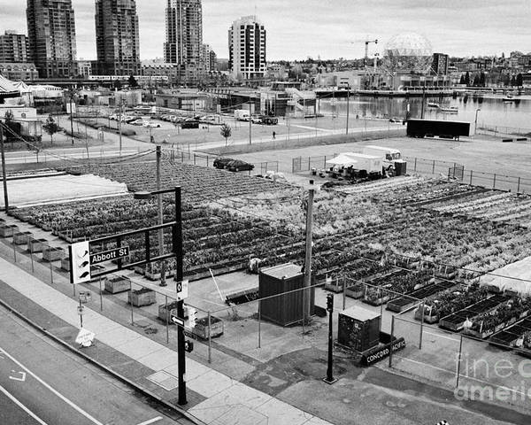 Concord Poster featuring the photograph urban farm on unused lot at concord pacific place at false creek Vancouver BC Canada by Joe Fox