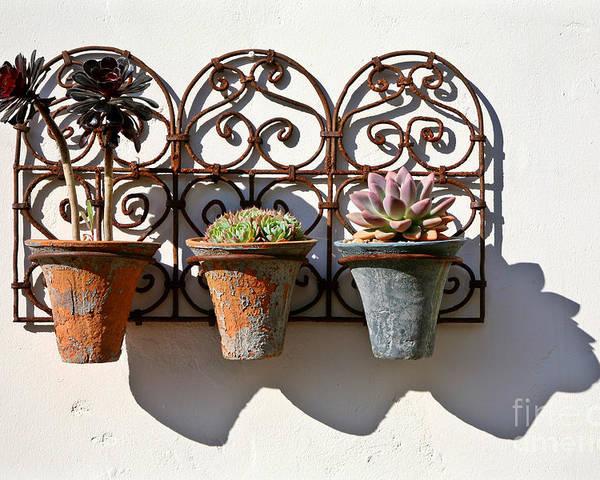 Kate Mckenna Poster featuring the photograph Vertical Cacti Garden by Kate McKenna