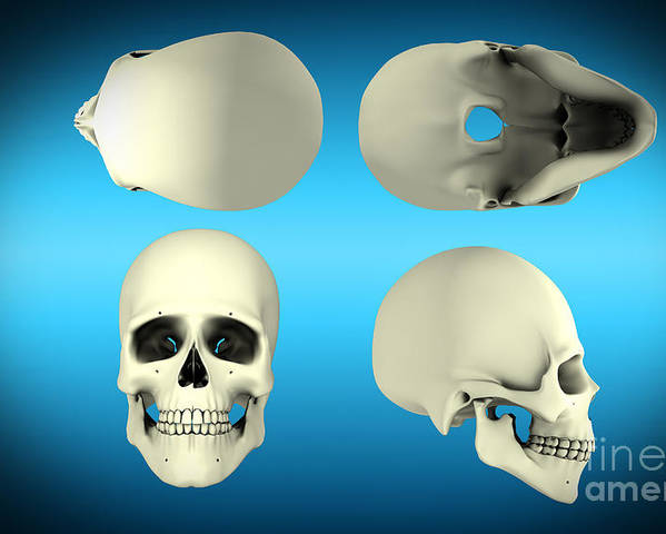 Horizontal Poster featuring the digital art View Of Human Skull From Different by Stocktrek Images
