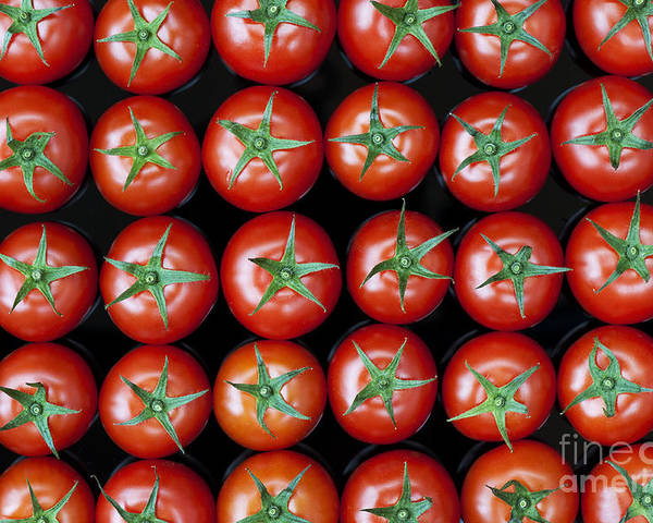 Vine Tomatoes Poster featuring the photograph Vine Tomato Pattern by Tim Gainey