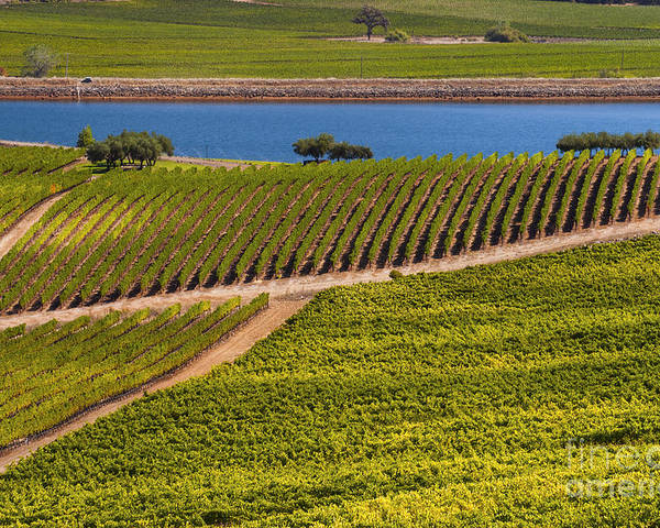 Napa Valley California Wineries Winery Grapevine Grapevines Row Rows Landscape Landscapes Plant Plants Vineyard Vineyards Pond Ponds Lake Lakes Water Poster featuring the photograph Vineyard On A Lake by Bob Phillips