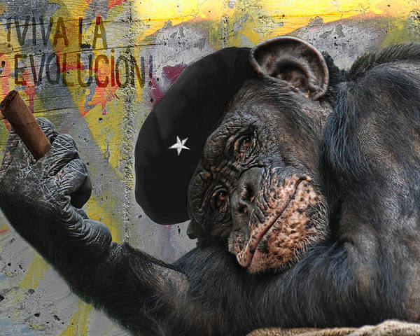 Animal Poster featuring the photograph Viva La Evolucion by Joachim G Pinkawa