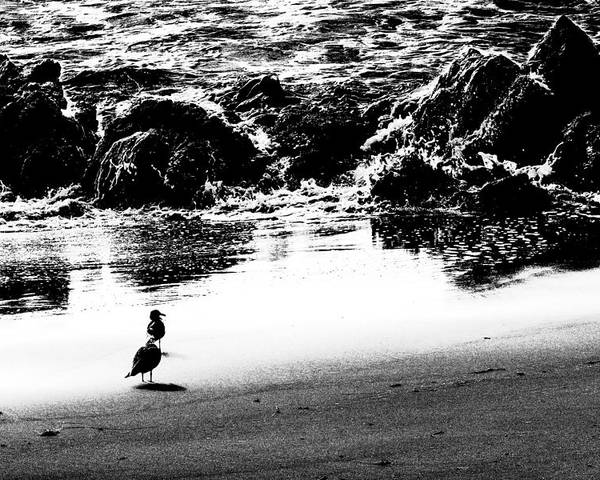 Beach Poster featuring the photograph Waiting For Their Meal Black And White by Jim Moss