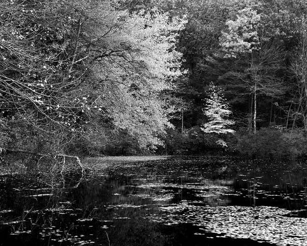Massachussetts Poster featuring the photograph Walden Pond by Christian Heeb