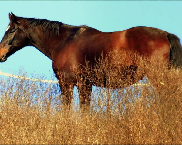 Horses Poster featuring the photograph Walking Tall by Karen Wiles
