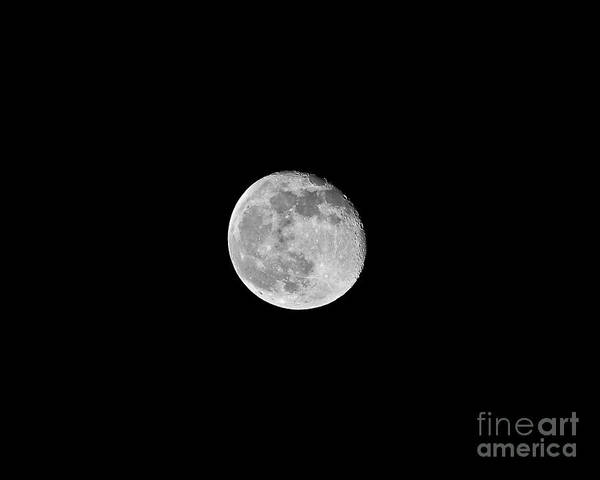 Moon Poster featuring the photograph Waning Flower Moon by Al Powell Photography USA