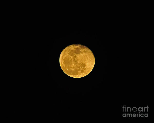 Moon Poster featuring the photograph Waning Passover Moon by Al Powell Photography USA