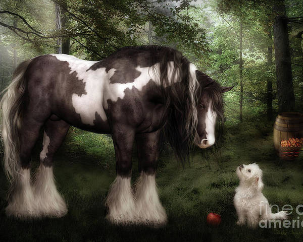 Gypsy Vanner Horse Poster featuring the digital art Want To Play by Shanina Conway