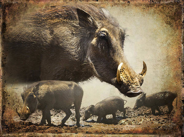 Warthog Poster featuring the photograph Warthog Profile by Ronel Broderick