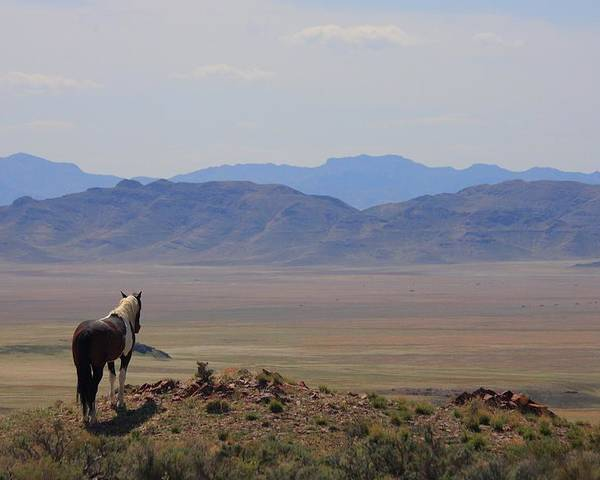 Wild Poster featuring the photograph Watching Over The Land by Gene Praag