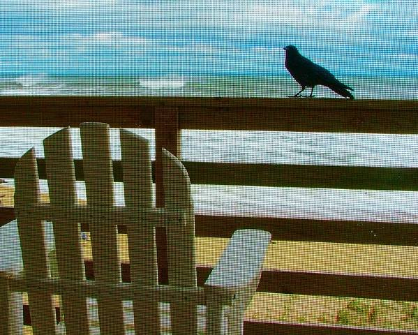 Blackbird Poster featuring the photograph Watching The Waves by Julie Dant