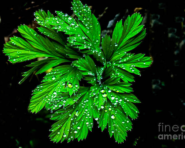 Leaf Poster featuring the photograph Water Drops by Robert Bales