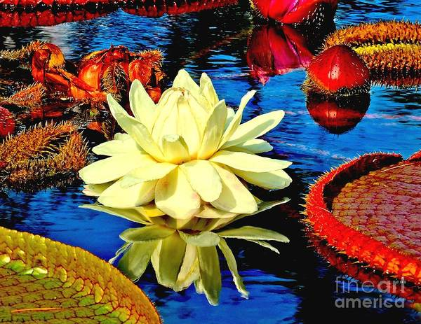 Aquatic Poster featuring the photograph Water Lilly Pond by Nick Zelinsky