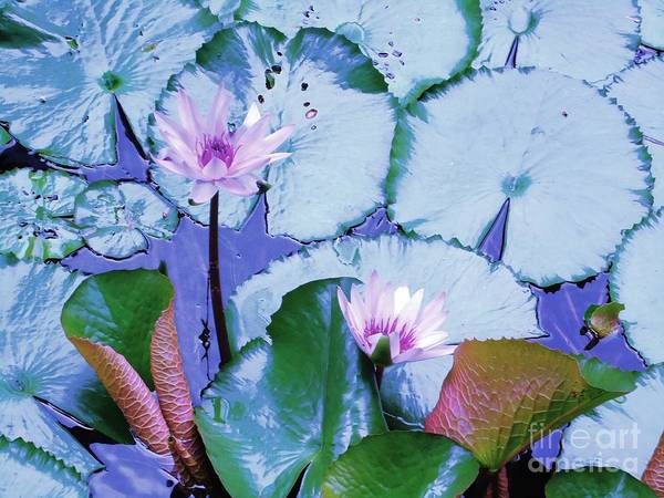 Water Poster featuring the photograph Water Lily II by Ann Johndro-Collins