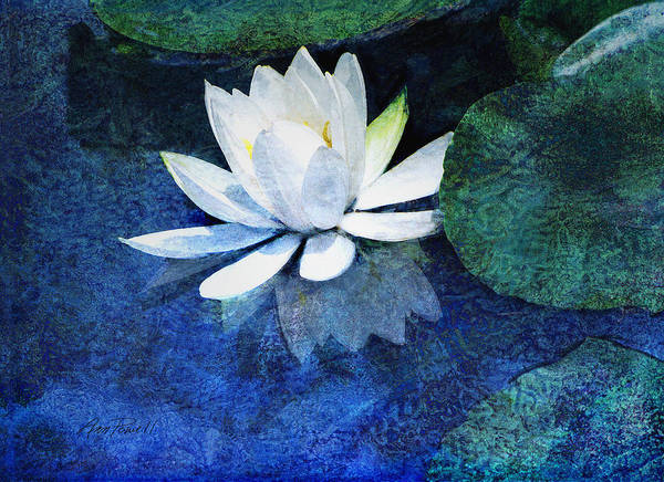 Water Lily Poster featuring the photograph Water Lily Two by Ann Powell