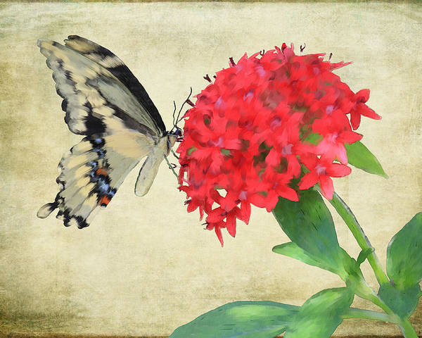 Butterfly Poster featuring the mixed media Watercolor Butterfly by Rosalie Scanlon