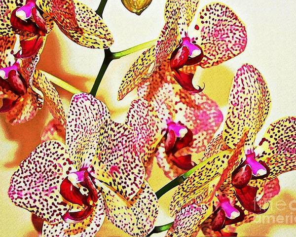 Orchid Poster featuring the photograph Watercolor Orchid Shadows by Judy Palkimas