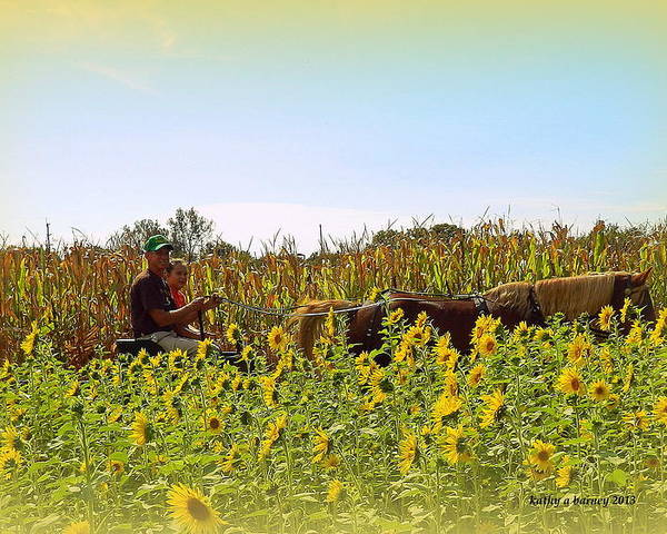Sunflowers Poster featuring the photograph Welcome To Gorman Farm In Evandale Ohio by Kathy Barney