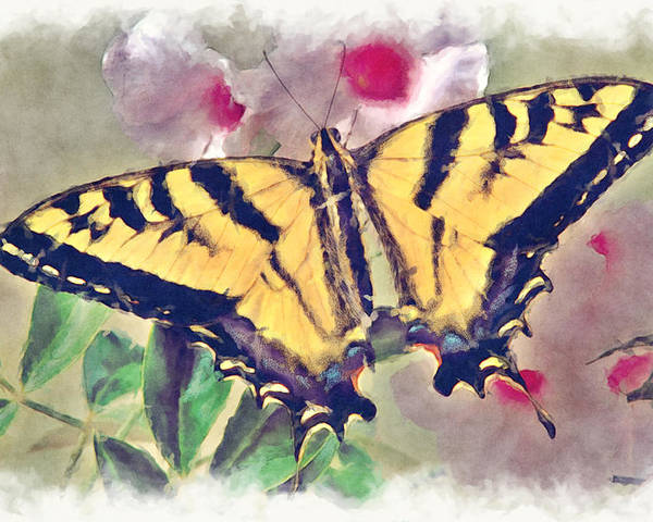 Bug Poster featuring the photograph Western Tiger Swallowtail Papilio On Flower by Robert Jensen