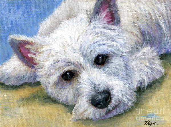 West Highland White Terrier Poster featuring the painting Westie by Hope Lane