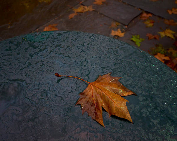 City Poster featuring the photograph Wet Leaf by Mike Horvath